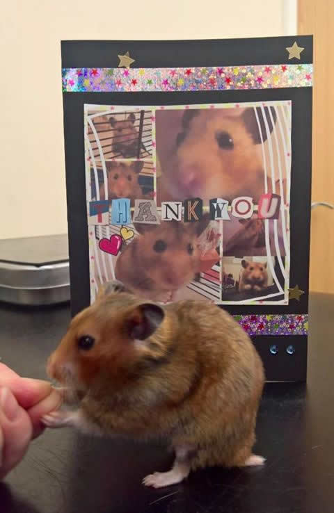 Hamster at Montgomery Vets