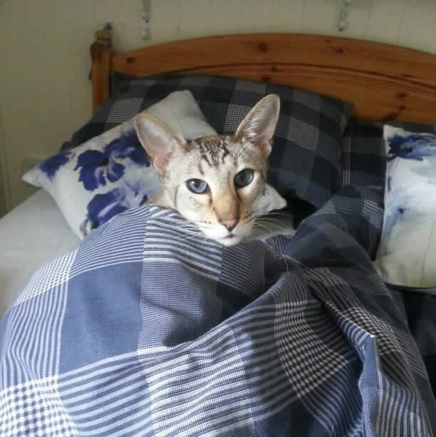 Mowgli in bed